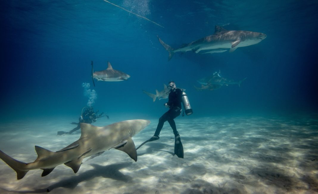 Man wearing a wetsuit scuba diving surrounded by sharks