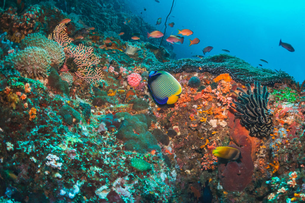 amazing colors when diving in lombok