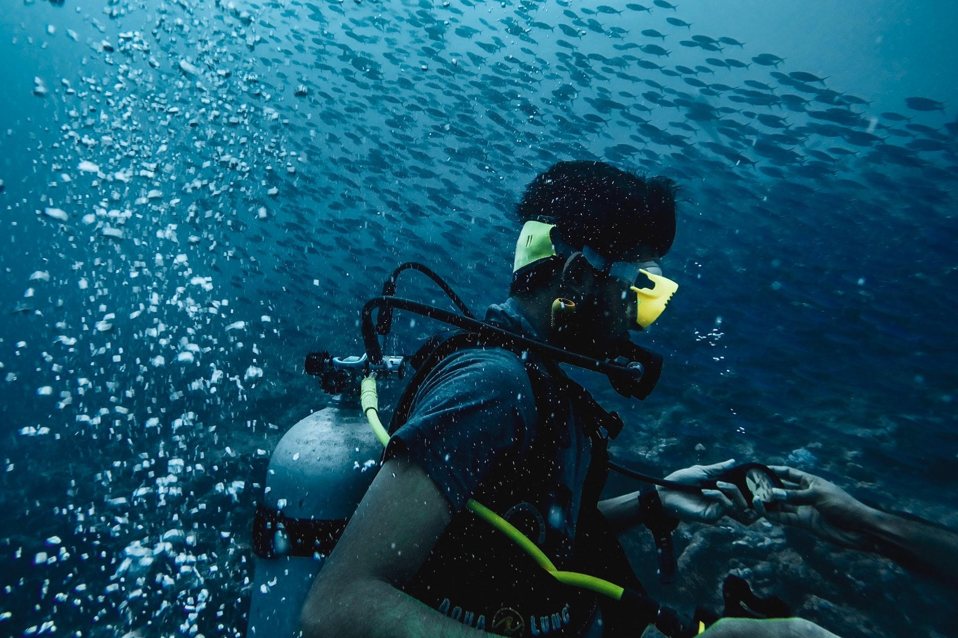 Do You Need To Be Certified To Go Scuba Diving? - DOWN TO ...