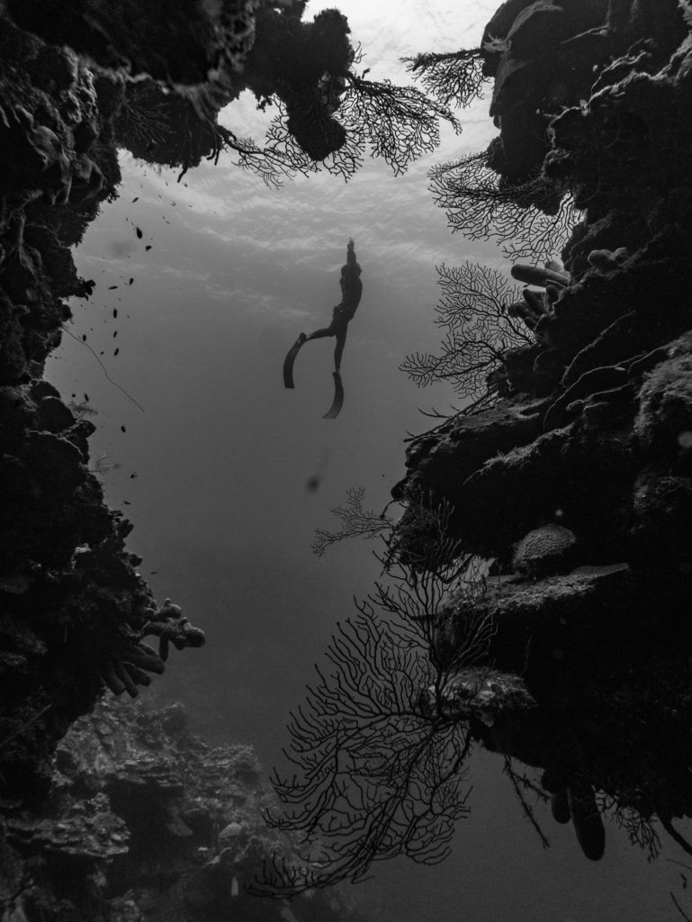 Freediver swimming up in black and white