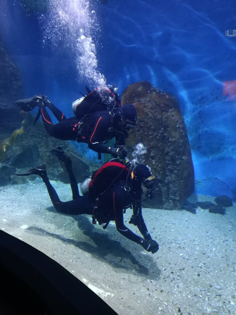 Shark Dive Instructor diving with his buddy at the Melbourne Aquarium