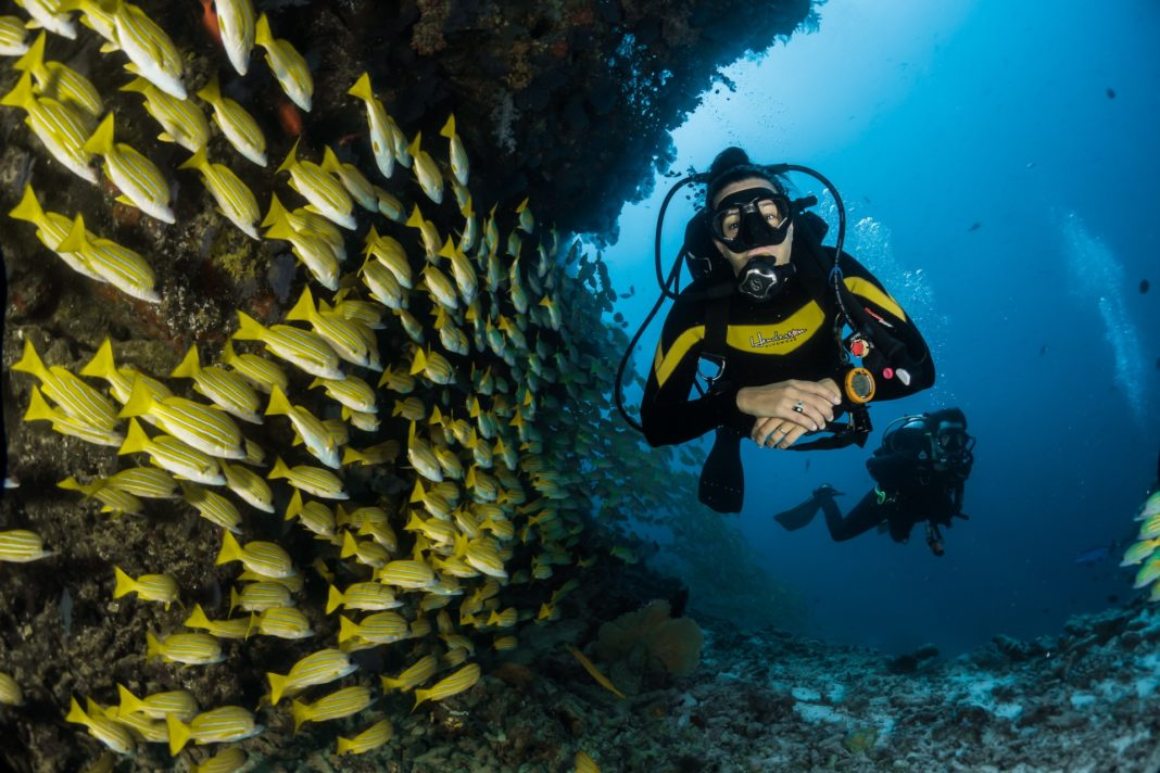 A scuba diver with a school of fish. Let's check this Scuba Acronym Guide.