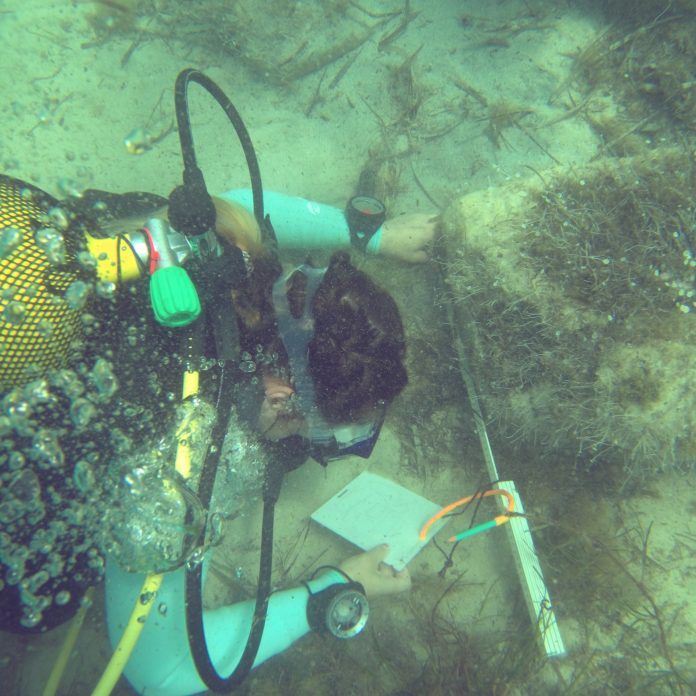Maritime Archaeologist, Chanelle, taking measurements underwater. This is one of many scuba diving employment opportunities for divers.