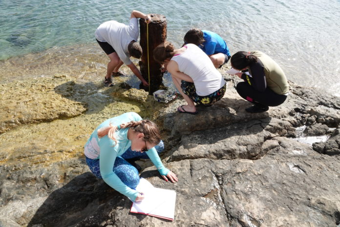 Maritime archaeologists hard at work by the shore