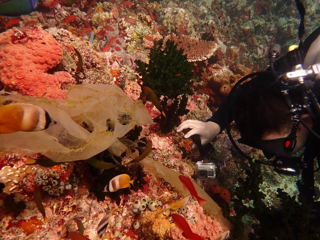 A diver carefully removing plastic caught on corals.