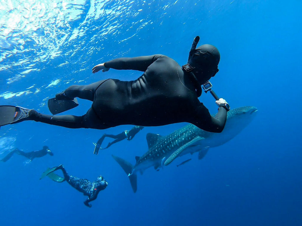 Breath-hold coach Tom Peled freediving with a whale shark