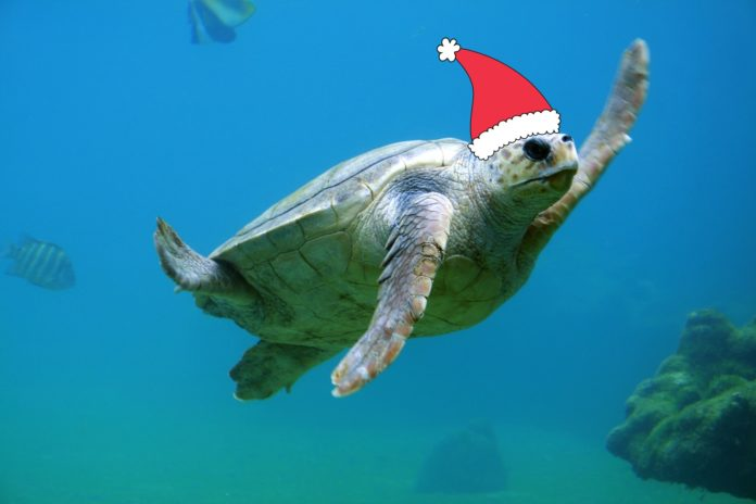 Christmas Diving Gifts for Divers - 2020