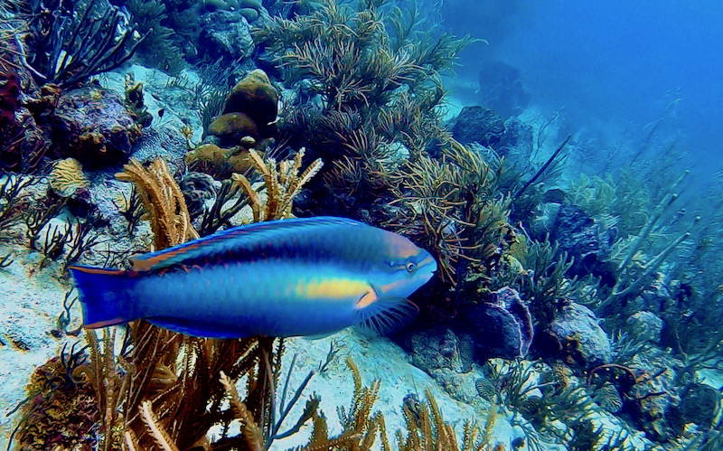 Bright colors when diving in Barbados