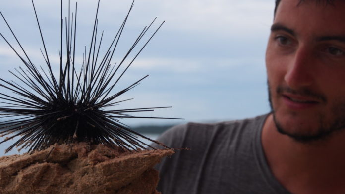 Lionel with a sea urchin in foot in Koh Rong, Cambodia