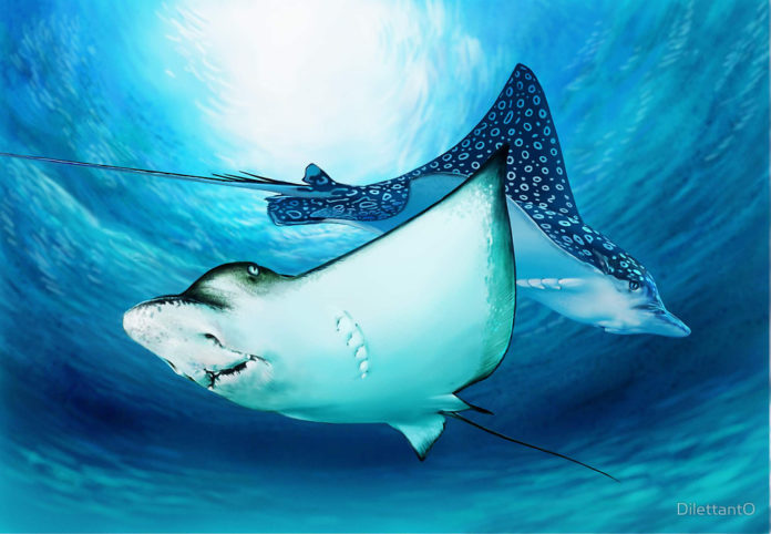 Two spotted eagle rays gliding above