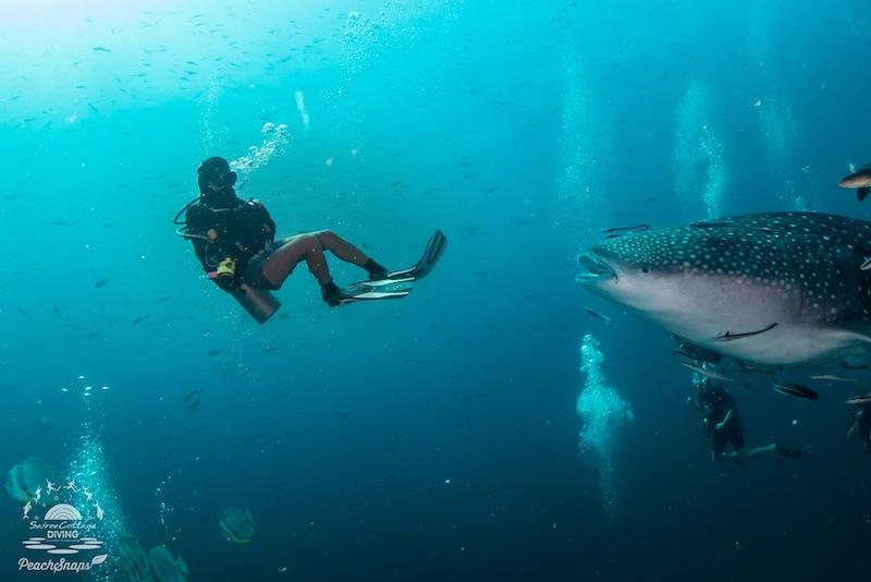 Down to Scuba founder, Emma, swimming with a whale shark.