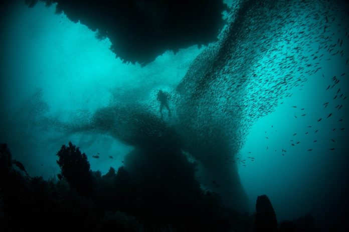 Diver on a decompression dive while surrounded by a school of fish.