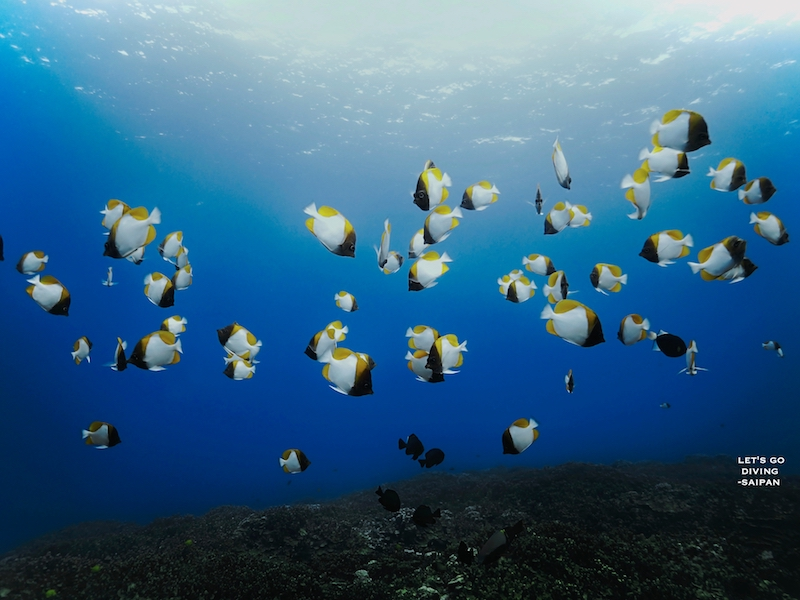 Amazing conditions and tropical fish diving in Saipan